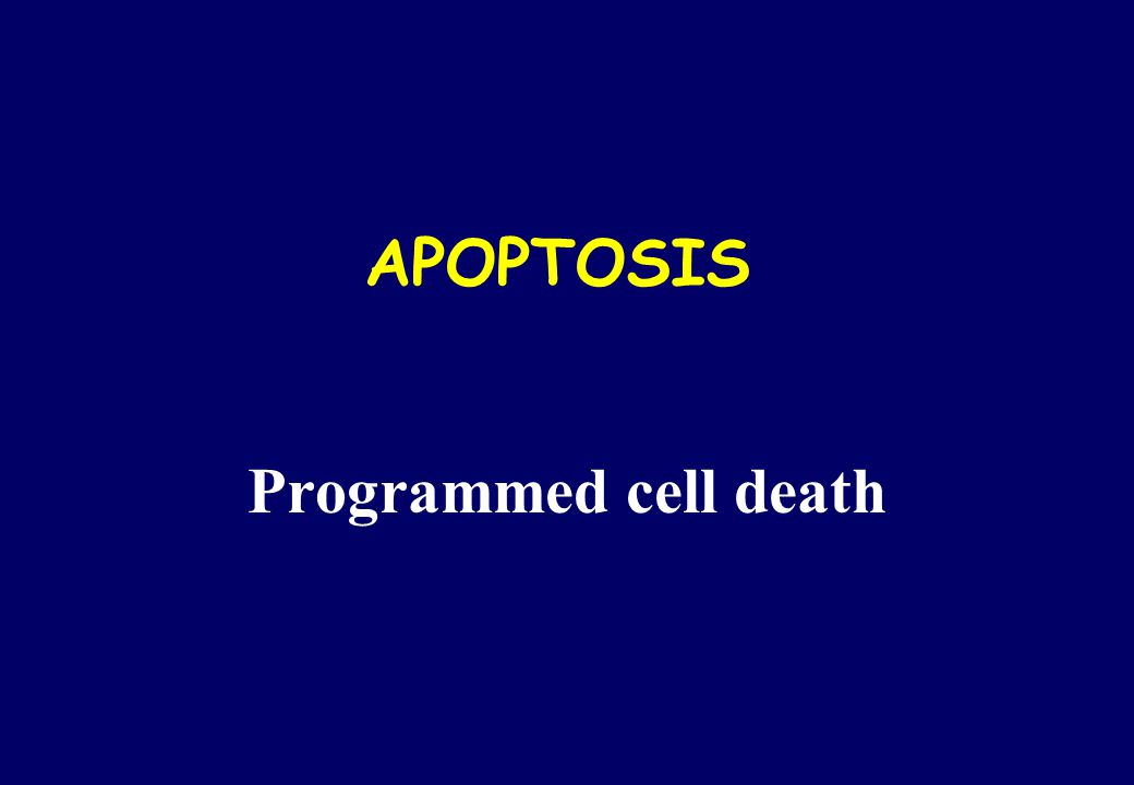 APOPTOSIS Programmed cell death