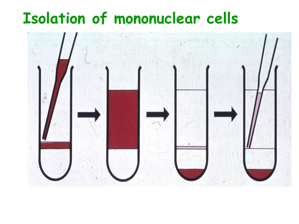 Isolation of mononuclear cells