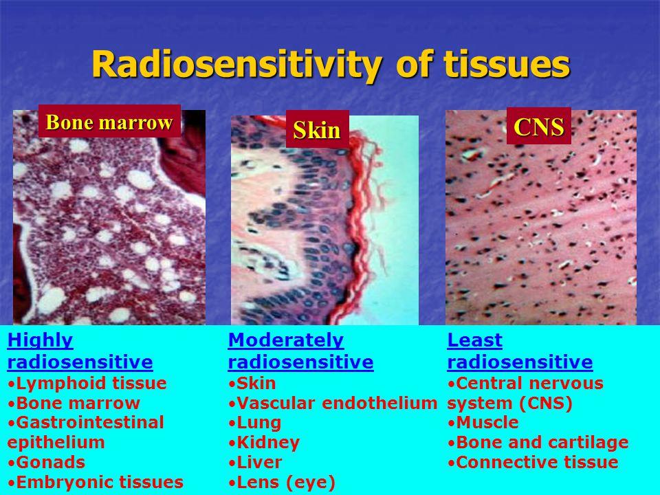 Moderately radiosensitive Skin Vascular endothelium Lung Kidney Liver Lens (eye) Radiosensitivity of tissues Highly radiosensitive Lymphoid tissue Bon