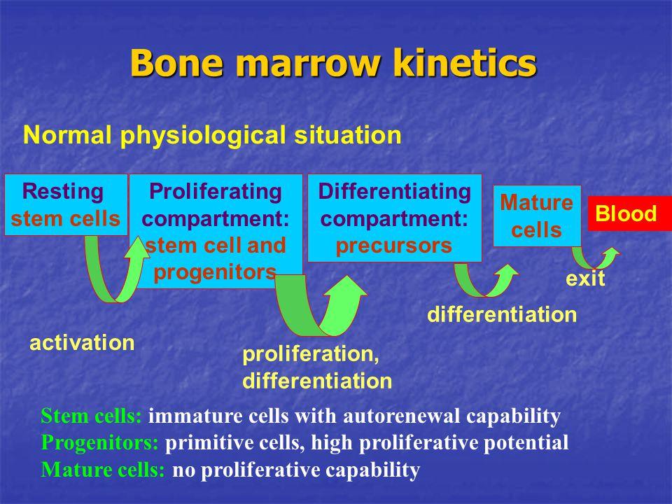 Bone marrow kinetics Resting stem cells Proliferating compartment: stem cell and progenitors Differentiating compartment: precursors Mature cells Bloo