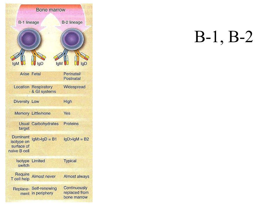 B-1, B-2