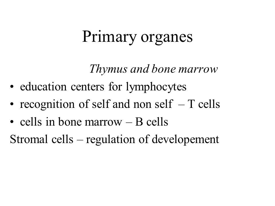 Primary organes Thymus and bone marrow education centers for lymphocytes recognition of self and non self – T cells cells in bone marrow – B cells Str