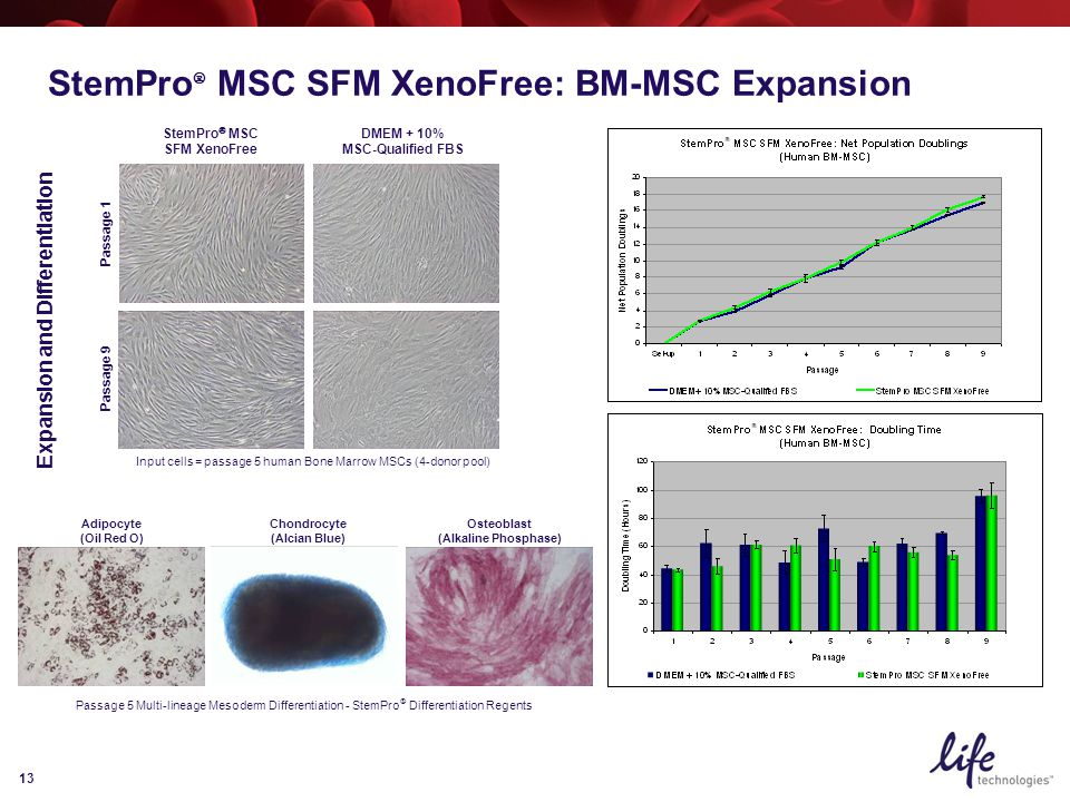 13 StemPro  MSC SFM XenoFree Passage 1 DMEM + 10% MSC-Qualified FBS Passage 9 Input cells = passage 5 human Bone Marrow MSCs (4-donor pool) Adipocyte (Oil Red O) Chondrocyte (Alcian Blue) Osteoblast (Alkaline Phosphase) Passage 5 Multi-lineage Mesoderm Differentiation - StemPro  Differentiation Regents Expansion and Differentiation StemPro  MSC SFM XenoFree: BM-MSC Expansion