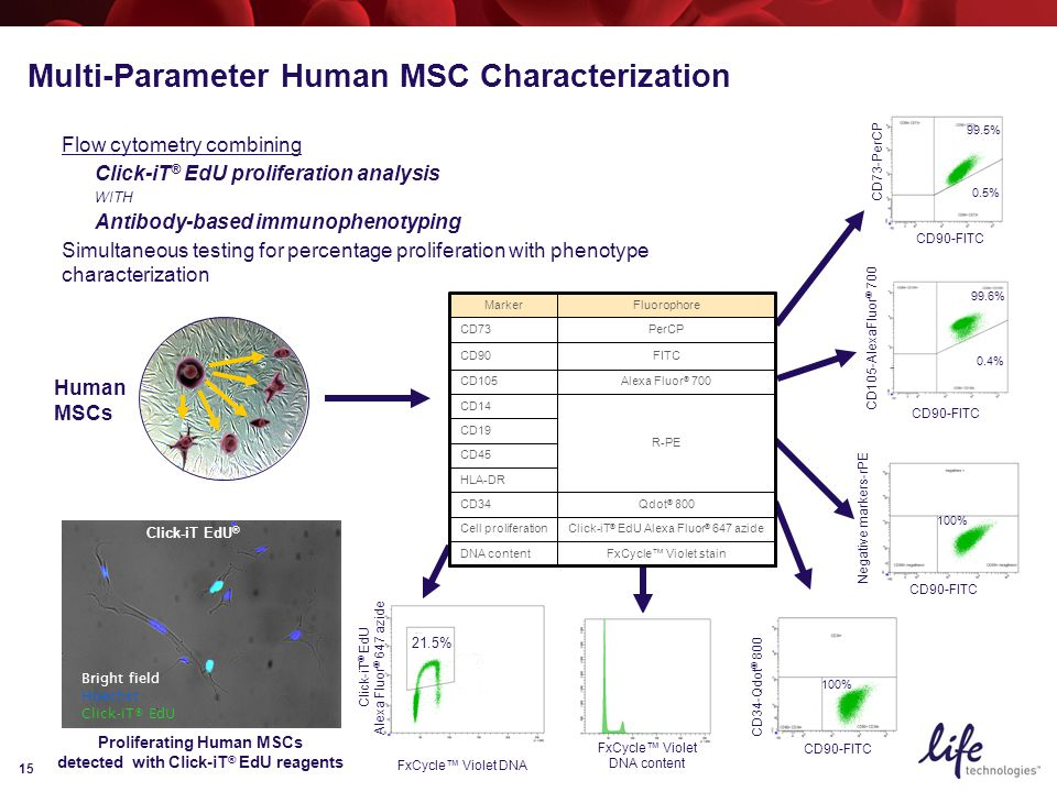 15 Multi-Parameter Human MSC Characterization FxCycle™ Violet stainDNA content Click-iT ® EdU Alexa Fluor ® 647 azideCell proliferation Qdot ® 800CD34 HLA-DR CD45 CD19 R-PE CD14 Alexa Fluor ® 700CD105 FITCCD90 PerCPCD73 FluorophoreMarker CD90-FITC CD105-AlexaFluor ® 700 99.6% 0.4% CD90-FITC Negative markers-rPE 100% CD90-FITC CD34-Qdot ® 800 100% CD90-FITC CD73-PerCP 99.5% 0.5% Flow cytometry combining Click-iT ® EdU proliferation analysis WITH Antibody-based immunophenotyping Simultaneous testing for percentage proliferation with phenotype characterization Click-iT EdU ® Bright field Hoechst Click-iT® EdU Human MSCs Click-iT ® EdU Alexa Fluor ® 647 azide FxCycle™ Violet DNA 21.5% FxCycle™ Violet DNA content Proliferating Human MSCs detected with Click-iT ® EdU reagents