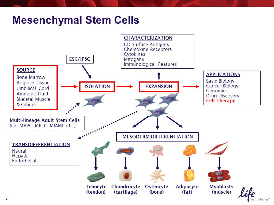 2 APPLICATIONS Basic Biology Cancer Biology Genomics Drug Discovery Cell Therapy CHARACTERIZATION CD Surface Antigens Chemokine Receptors CytokinesMitogens Immunological Features SOURCE Bone Marrow Adipose Tissue Umbilical Cord Amniotic Fluid Skeletal Muscle & Others ESC/iPSC Multi-lineage Adult Stem Cells (i.e.