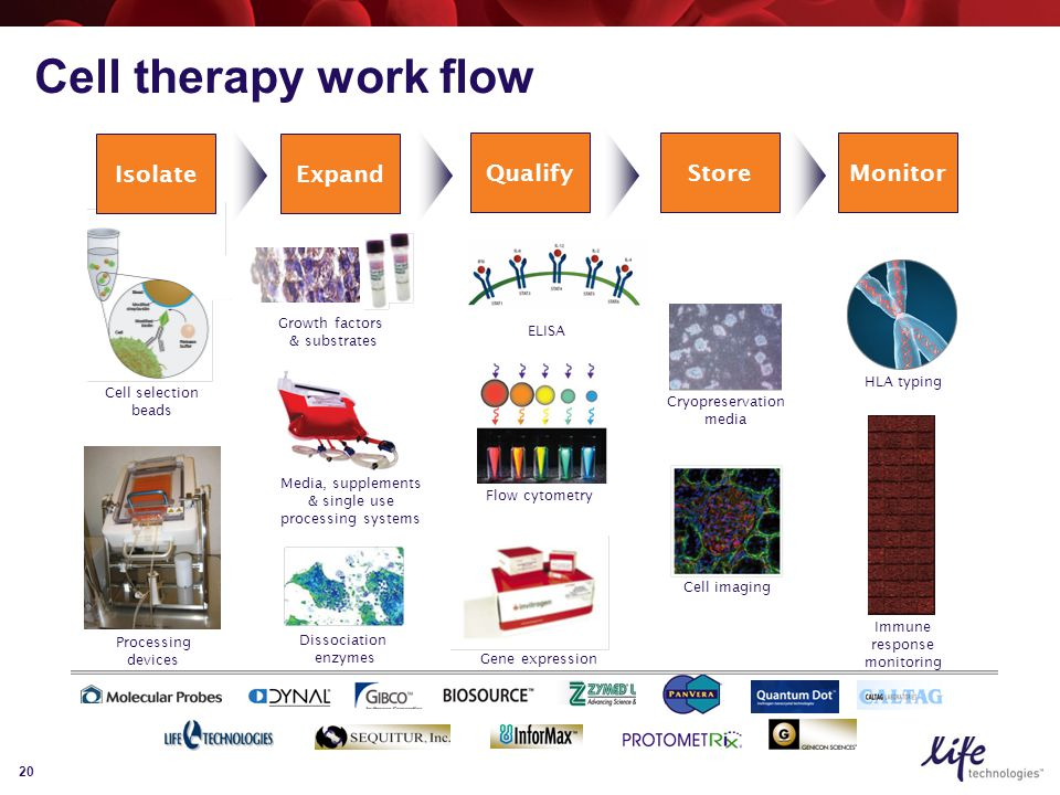 20 Expand QualifyStore Isolate Growth factors & substrates ELISA Cell selection beads Cell imaging Gene expression Media, supplements & single use processing systems Cryopreservation media Flow cytometry Monitor Dissociation enzymes Processing devices Cell therapy work flow HLA typing Immune response monitoring