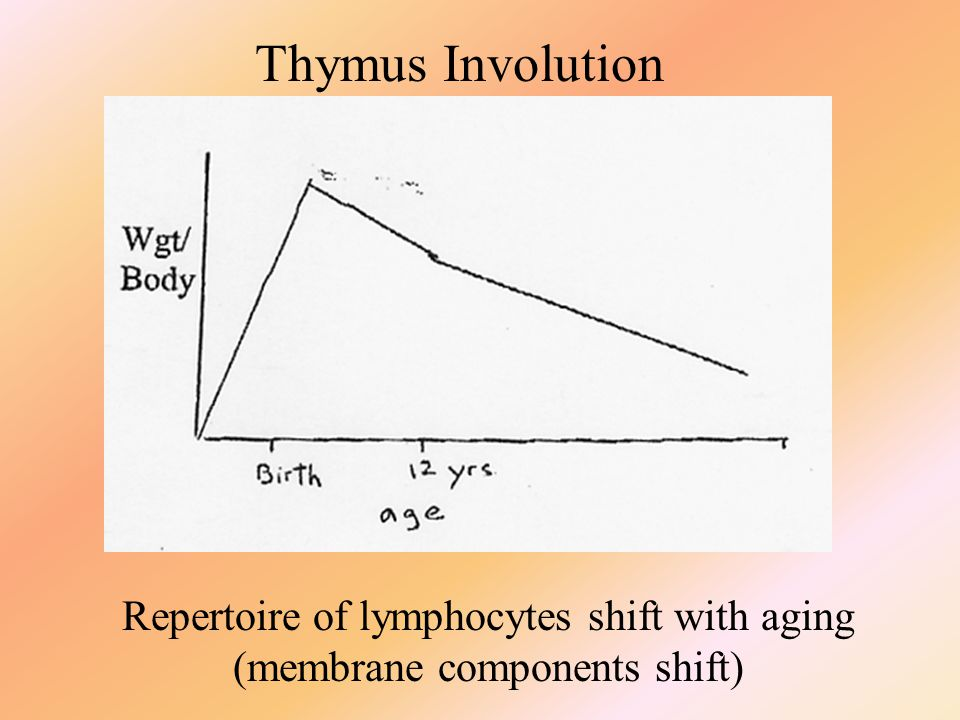 Thymus Involution Repertoire of lymphocytes shift with aging (membrane components shift)
