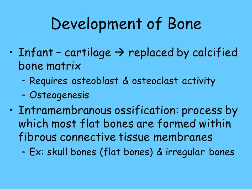 Development of Bone Infant – cartilage  replaced by calcified bone matrix –Requires osteoblast & osteoclast activity –Osteogenesis Intramembranous ossification: process by which most flat bones are formed within fibrous connective tissue membranes –Ex: skull bones (flat bones) & irregular bones
