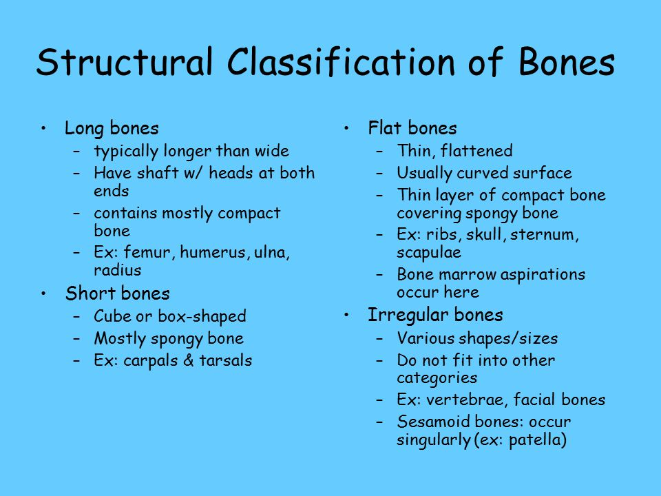 Structural Classification of Bones Long bones –typically longer than wide –Have shaft w/ heads at both ends –contains mostly compact bone –Ex: femur, humerus, ulna, radius Short bones –Cube or box-shaped –Mostly spongy bone –Ex: carpals & tarsals Flat bones –Thin, flattened –Usually curved surface –Thin layer of compact bone covering spongy bone –Ex: ribs, skull, sternum, scapulae –Bone marrow aspirations occur here Irregular bones –Various shapes/sizes –Do not fit into other categories –Ex: vertebrae, facial bones –Sesamoid bones: occur singularly (ex: patella)