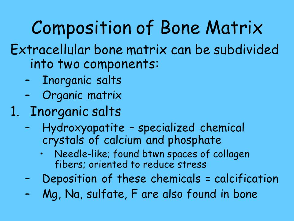 Composition of Bone Matrix Extracellular bone matrix can be subdivided into two components: –Inorganic salts –Organic matrix 1.Inorganic salts –Hydroxyapatite – specialized chemical crystals of calcium and phosphate Needle-like; found btwn spaces of collagen fibers; oriented to reduce stress –Deposition of these chemicals = calcification –Mg, Na, sulfate, F are also found in bone
