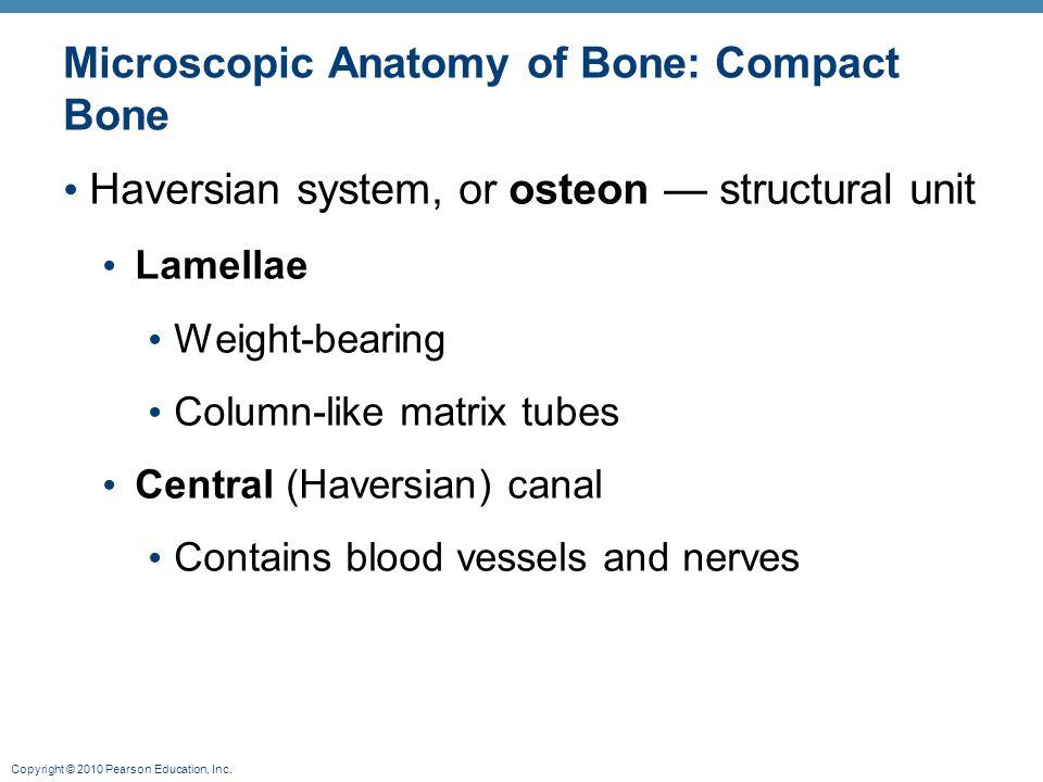 Copyright © 2010 Pearson Education, Inc. Microscopic Anatomy of Bone: Compact Bone Haversian system, or osteon — structural unit Lamellae Weight-beari