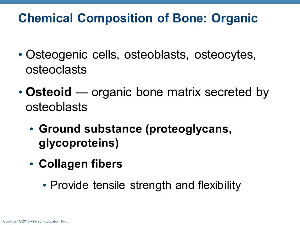 Copyright © 2010 Pearson Education, Inc. Chemical Composition of Bone: Organic Osteogenic cells, osteoblasts, osteocytes, osteoclasts Osteoid — organi