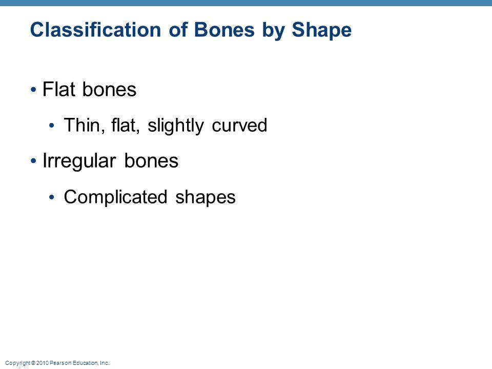Copyright © 2010 Pearson Education, Inc. Classification of Bones by Shape Flat bones Thin, flat, slightly curved Irregular bones Complicated shapes