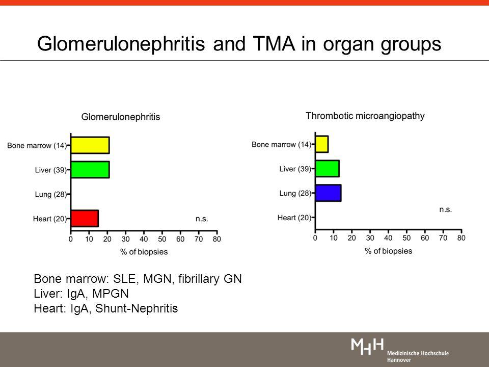 Bone marrow: SLE, MGN, fibrillary GN Liver: IgA, MPGN Heart: IgA, Shunt-Nephritis Glomerulonephritis and TMA in organ groups