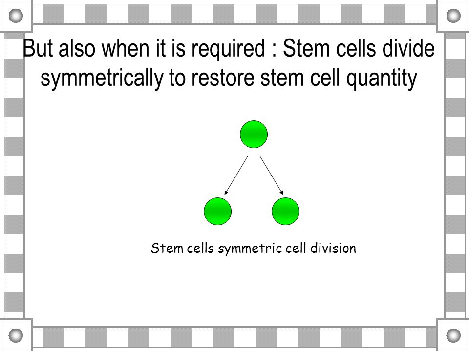 But also when it is required : Stem cells divide symmetrically to restore stem cell quantity Stem cells symmetric cell division