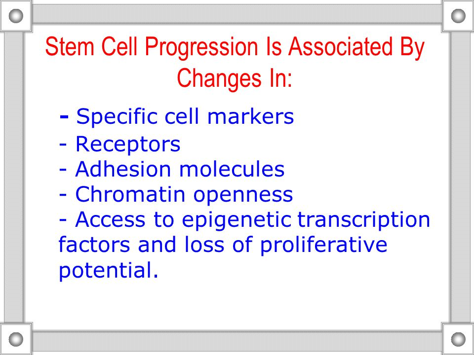 Stem Cell Progression Is Associated By Changes In: - Specific cell markers - Receptors - Adhesion molecules - Chromatin openness - Access to epigenetic transcription factors and loss of proliferative potential.