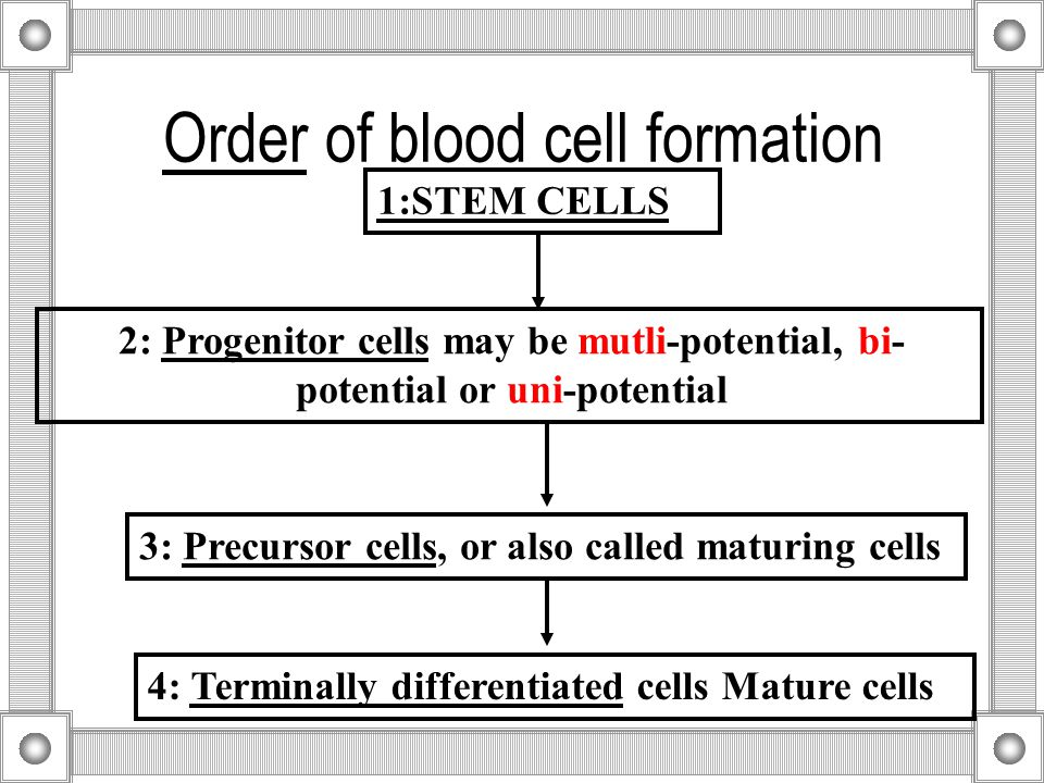 Order of blood cell formation 1:STEM CELLS 2: Progenitor cells may be mutli-potential, bi- potential or uni-potential 3: Precursor cells, or also called maturing cells 4: Terminally differentiated cells Mature cells