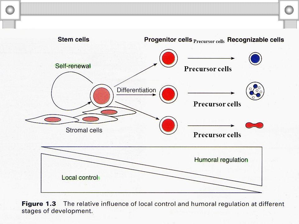 Precursor cells