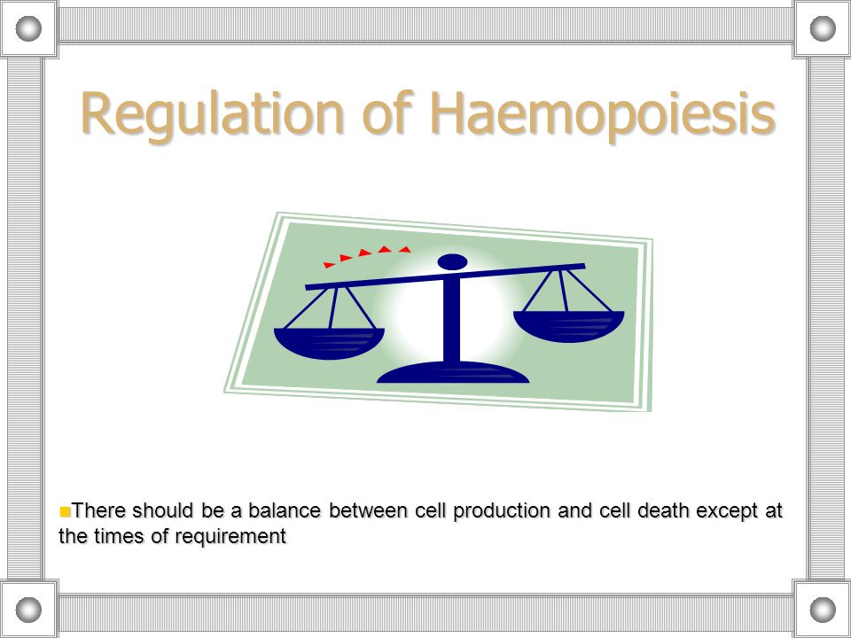 Regulation of Haemopoiesis There should be a balance between cell production and cell death except at the times of requirement There should be a balance between cell production and cell death except at the times of requirement