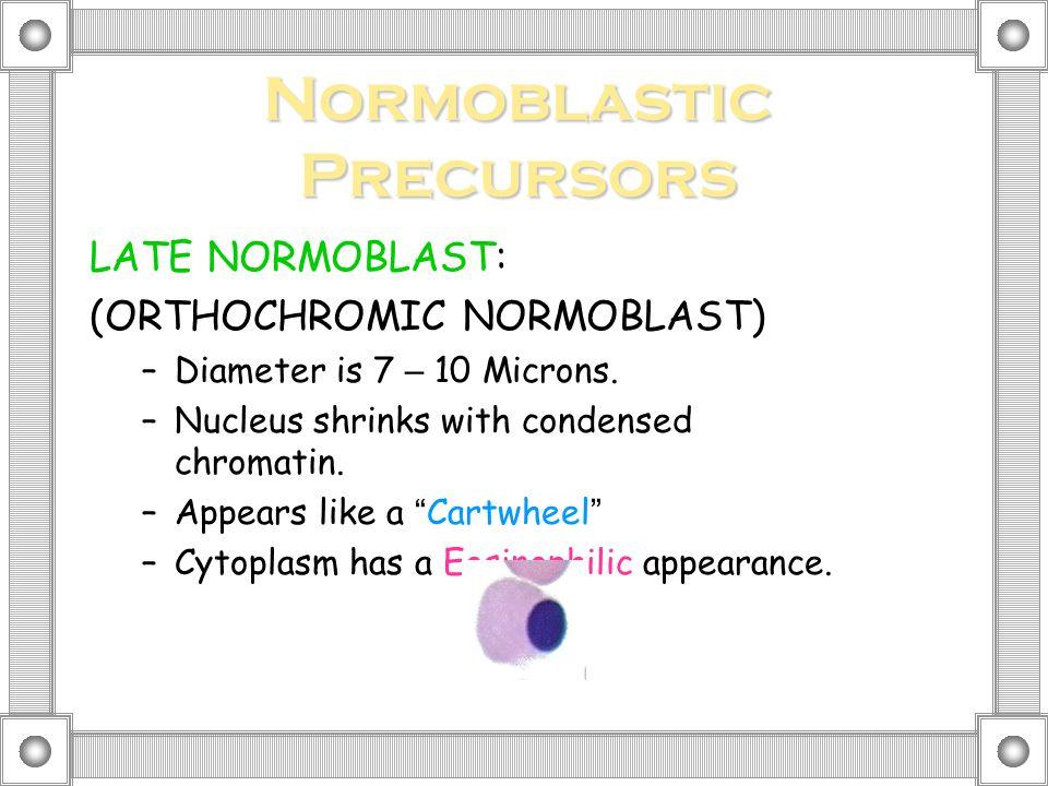 Normoblastic Precursors LATE NORMOBLAST: (ORTHOCHROMIC NORMOBLAST) –Diameter is 7 – 10 Microns.