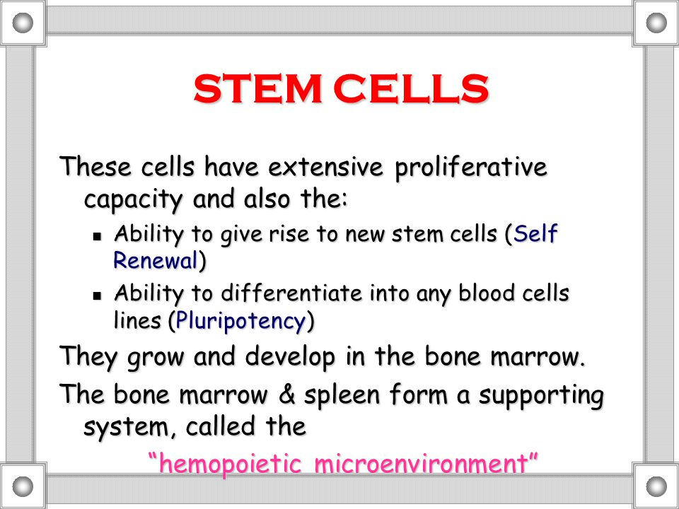 STEM CELLS These cells have extensive proliferative capacity and also the: Ability to give rise to new stem cells (Self Renewal) Ability to give rise to new stem cells (Self Renewal) Ability to differentiate into any blood cells lines (Pluripotency) Ability to differentiate into any blood cells lines (Pluripotency) They grow and develop in the bone marrow.