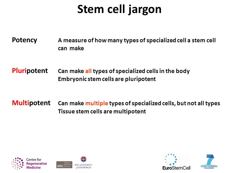 Stem cell jargon Potency A measure of how many types of specialized cell a stem cell can make Pluripotent Can make all types of specialized cells in the body Embryonic stem cells are pluripotent Multipotent Can make multiple types of specialized cells, but not all types Tissue stem cells are multipotent