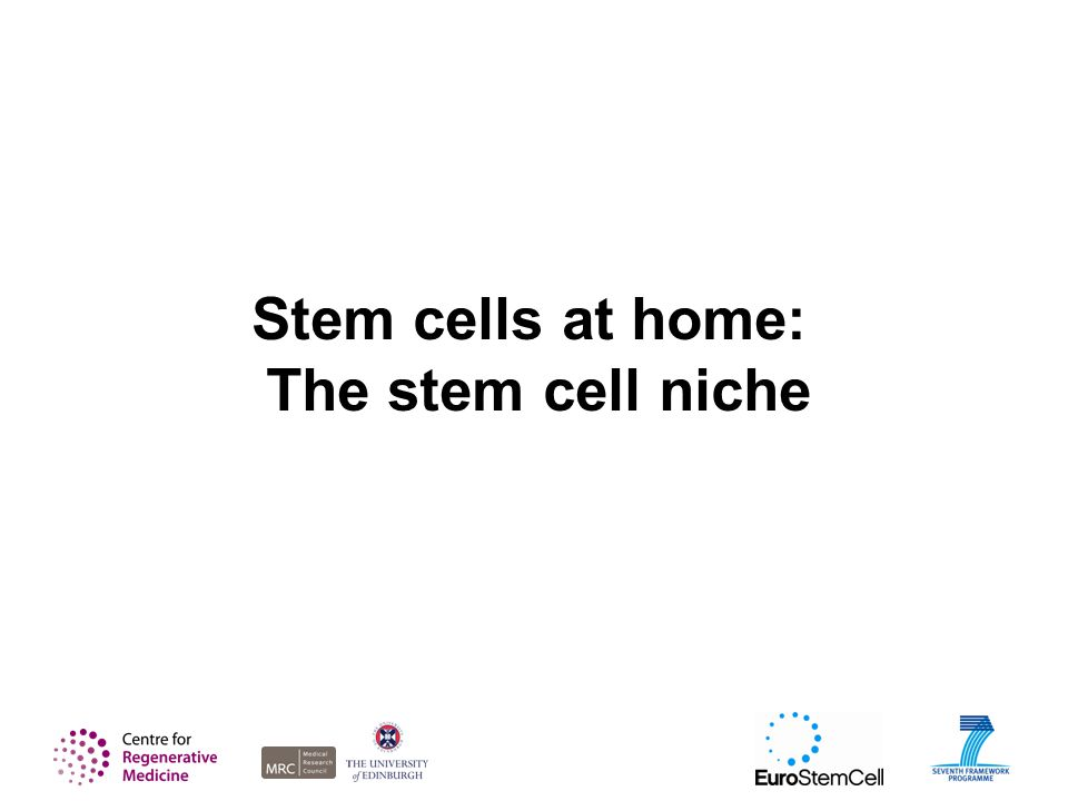 Stem cells at home: The stem cell niche
