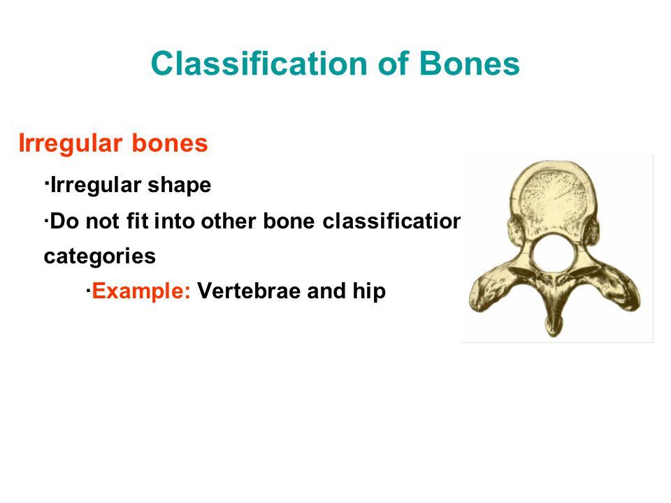Classification of Bones Irregular bones · Irregular shape ·Do not fit into other bone classification categories ·Example: Vertebrae and hip