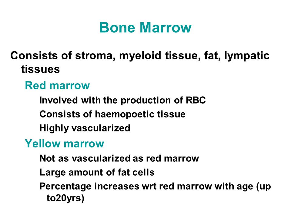 Bone Marrow Consists of stroma, myeloid tissue, fat, lympatic tissues Red marrow Involved with the production of RBC Consists of haemopoetic tissue Highly vascularized Yellow marrow Not as vascularized as red marrow Large amount of fat cells Percentage increases wrt red marrow with age (up to20yrs)