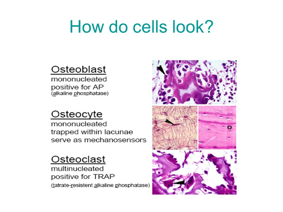 How do cells look?