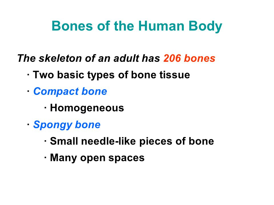 Bones of the Human Body The skeleton of an adult has 206 bones · Two basic types of bone tissue · Compact bone · Homogeneous · Spongy bone · Small needle-like pieces of bone · Many open spaces