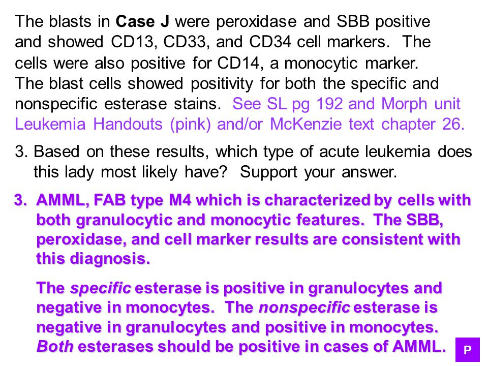 The blasts in Case J were peroxidase and SBB positive and showed CD13, CD33, and CD34 cell markers. The cells were also positive for CD14, a monocytic