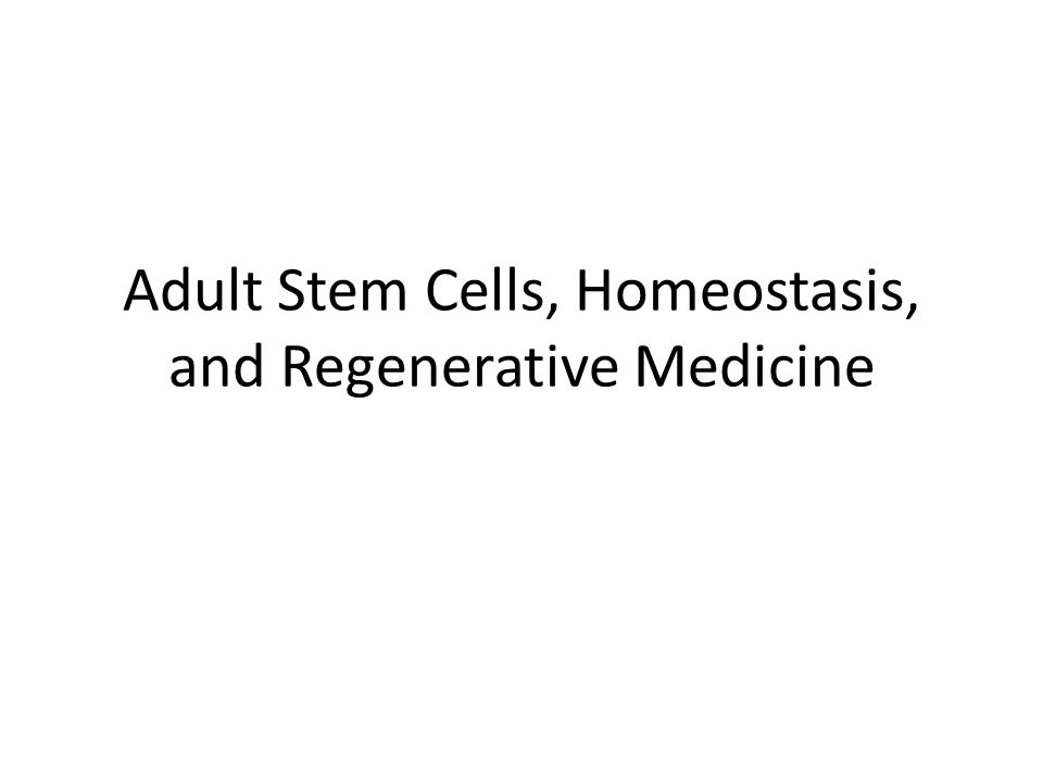 What are Adult Stem Cells.