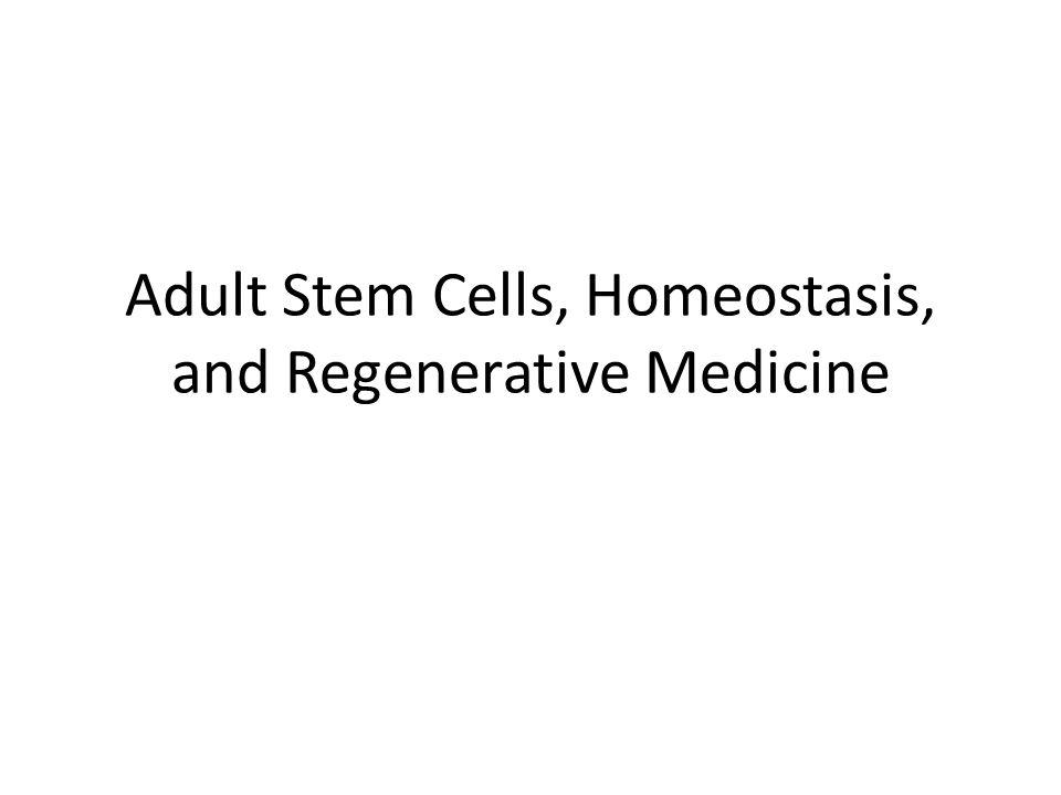 Adult Stem Cells, Homeostasis, and Regenerative Medicine