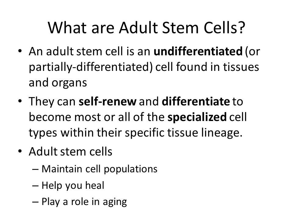 Adult Stem Cell Therapies Bone Marrow Transplant