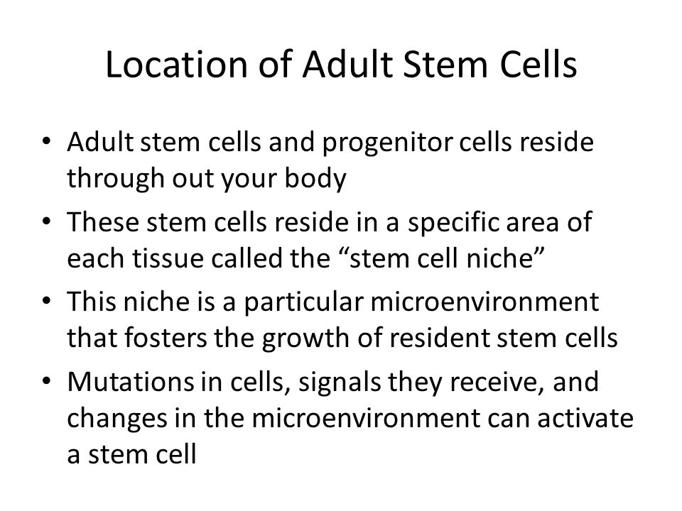 Types of Adult Stem Cells Hematopoietic stem cells: blood and immune system Mesenchymal stem cells: bone, cartilage, fat, muscle, tendon/ligament Neural stem cells: neurons, glial cells Epithelial stem cells: skin, linings
