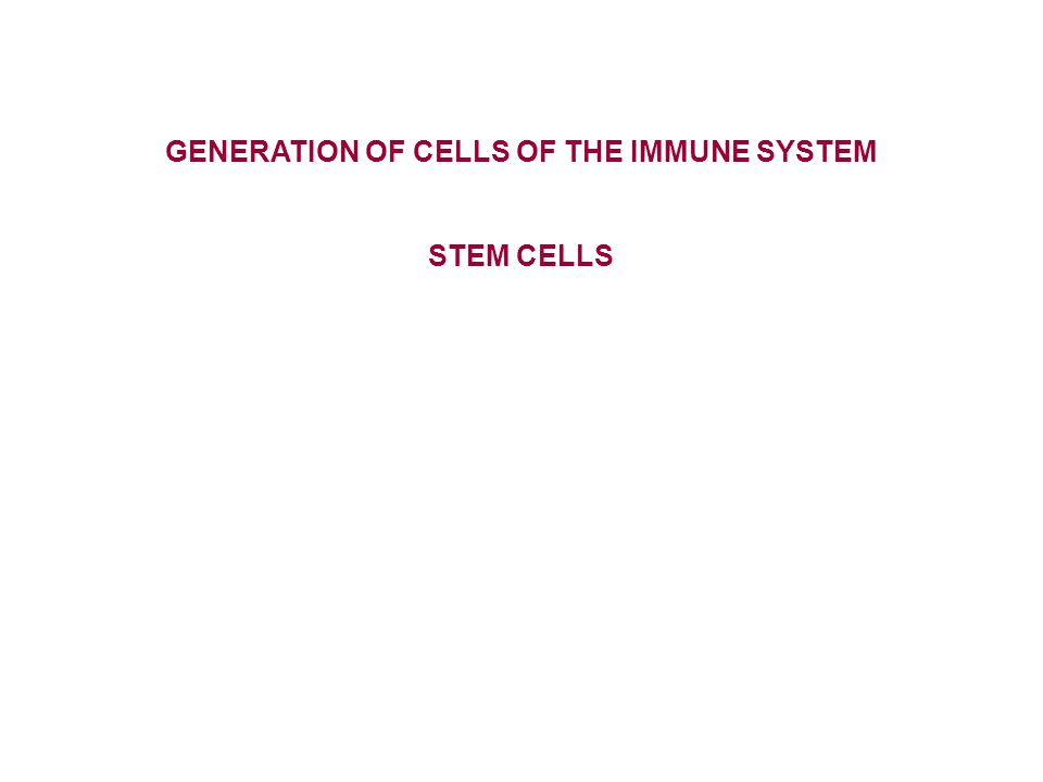 GENERATION OF CELLS OF THE IMMUNE SYSTEM STEM CELLS