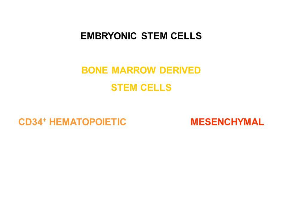 EMBRYONIC STEM CELLS BONE MARROW DERIVED STEM CELLS CD34 + HEMATOPOIETICMESENCHYMAL