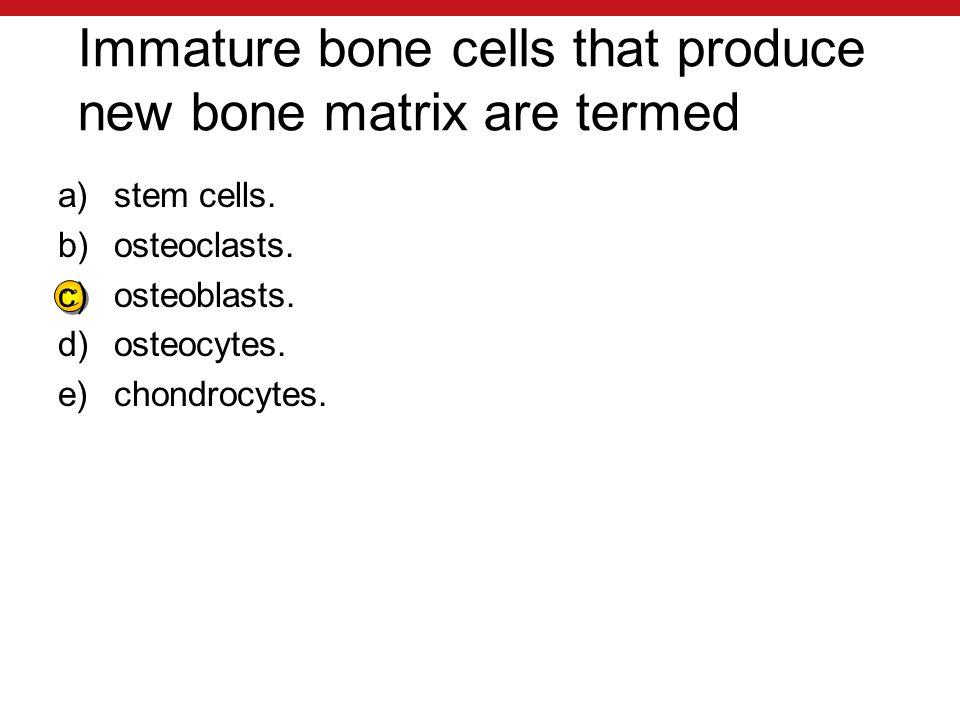Immature bone cells that produce new bone matrix are termed a)stem cells.