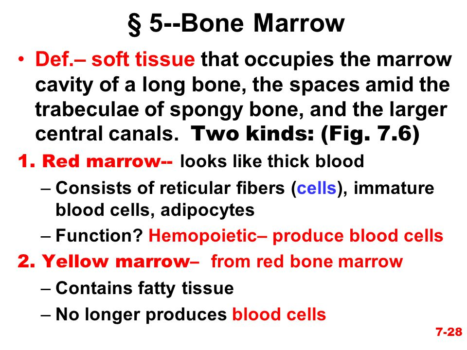 § 5--Bone Marrow Def.– soft tissue that occupies the marrow cavity of a long bone, the spaces amid the trabeculae of spongy bone, and the larger centr