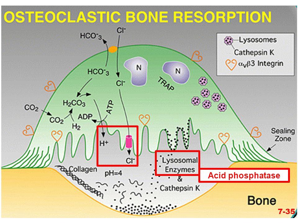 7-35 Acid phosphatase