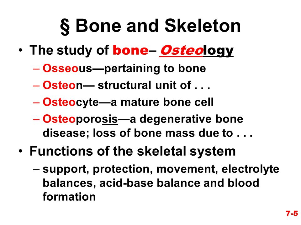 7-5 § Bone and Skeleton The study of bone – Osteology –Osseous—pertaining to bone –Osteon— structural unit of... –Osteocyte—a mature bone cell –Osteop