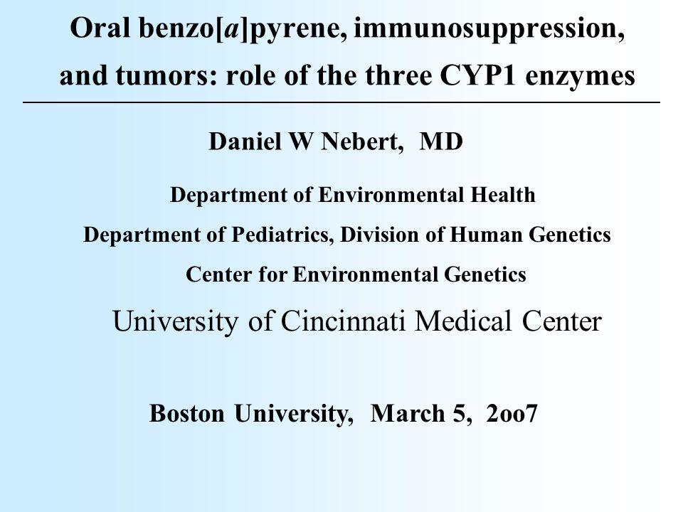 Cyp1a1(-/-) controlCyp1(+/+) BaPCyp1a1(-/-) BaP BONE MARROW: Oral BaP, 125 mg/kg/day for 18 days; death 24-32 days for Cyp1a1(-/-)