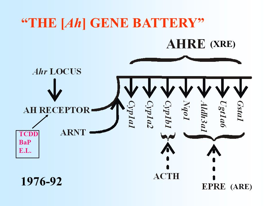 """THE [Ah] GENE BATTERY"" (XRE) 1976-92 (ARE) TCDD BaP E.L."
