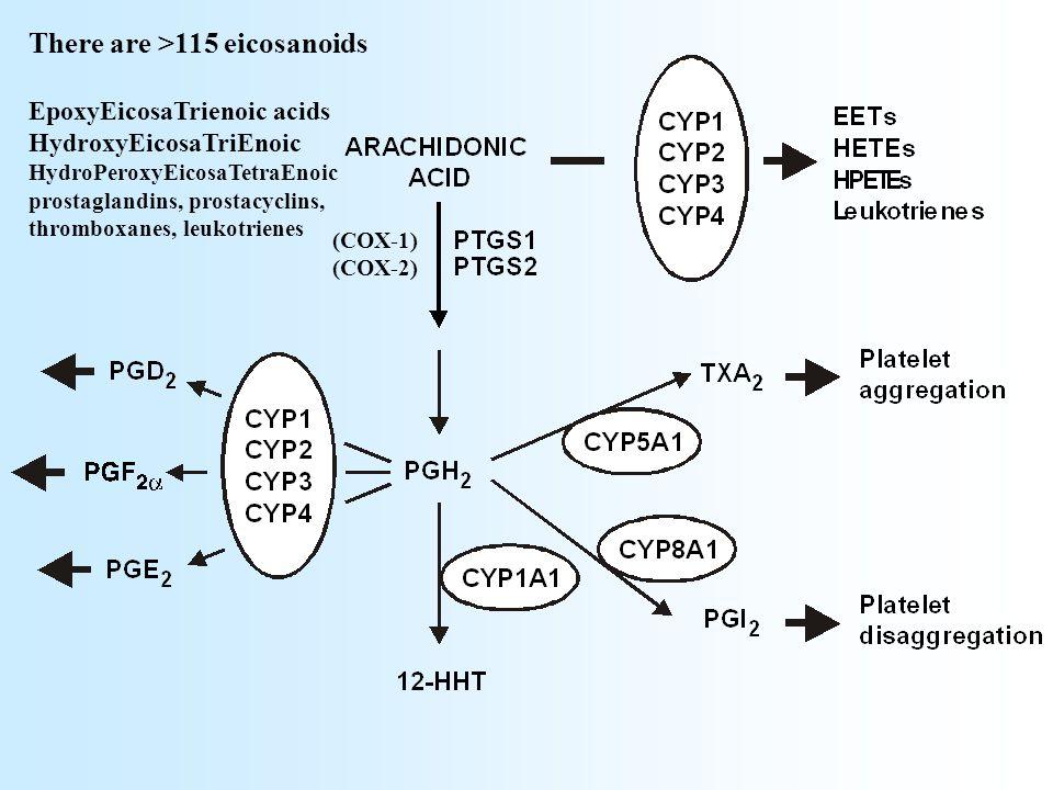 (COX-1) (COX-2) There are >115 eicosanoids EpoxyEicosaTrienoic acids HydroxyEicosaTriEnoic HydroPeroxyEicosaTetraEnoic prostaglandins, prostacyclins, thromboxanes, leukotrienes