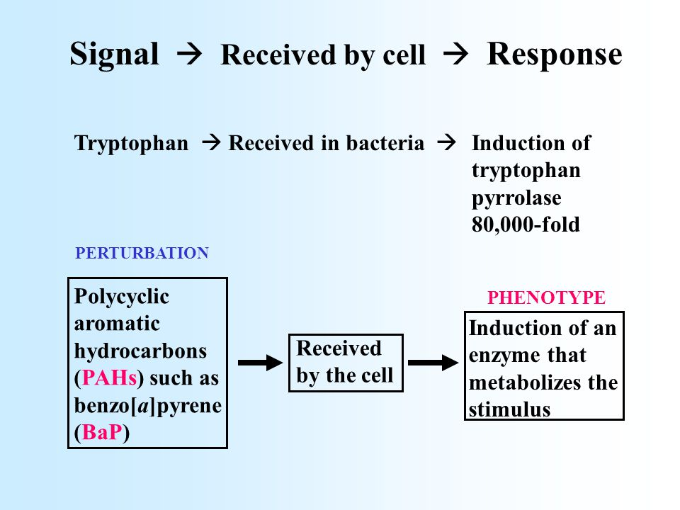 Signal  Received by cell  Response Polycyclic aromatic hydrocarbons (PAHs) such as benzo[a]pyrene (BaP) Received by the cell Induction of an enzyme that metabolizes the stimulus Tryptophan  Received in bacteria  Induction of tryptophan pyrrolase 80,000-fold PHENOTYPE PERTURBATION