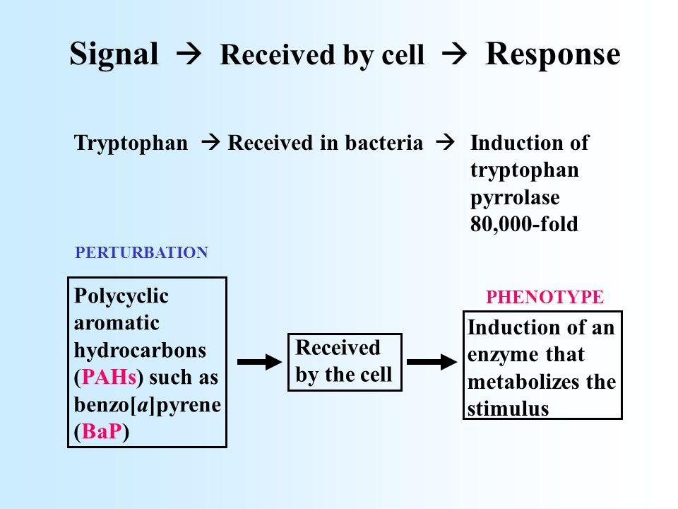Arachidonic acid  EETs, HPETEs : bronchodilation, renal vasoconstriction, intestinal vasodilation, inhibit cyclooxygenase, stimulate c-Fos and c-Jun, mitogenesis, inhibit platelet aggregation, peptide hormone secretion, mobilize intracellular Ca ++, electrolyte transport, M ++ homeostasis during inflammation HETEs;  -,  -1 alcohols : vasodilation, chemotaxis, vasoconstriction, bronchoconstriction, inhibit Na,K ATPase, stimulate Na,K-ATPase