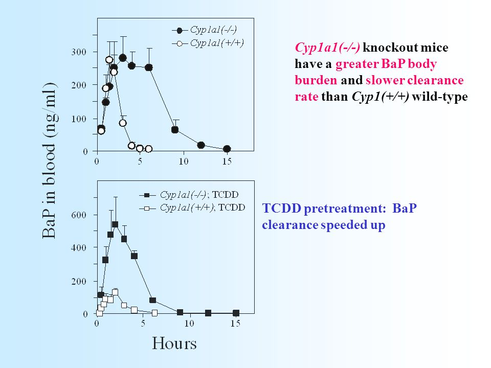 Cyp1a1(-/-) knockout mice have a greater BaP body burden and slower clearance rate than Cyp1(+/+) wild-type TCDD pretreatment: BaP clearance speeded u