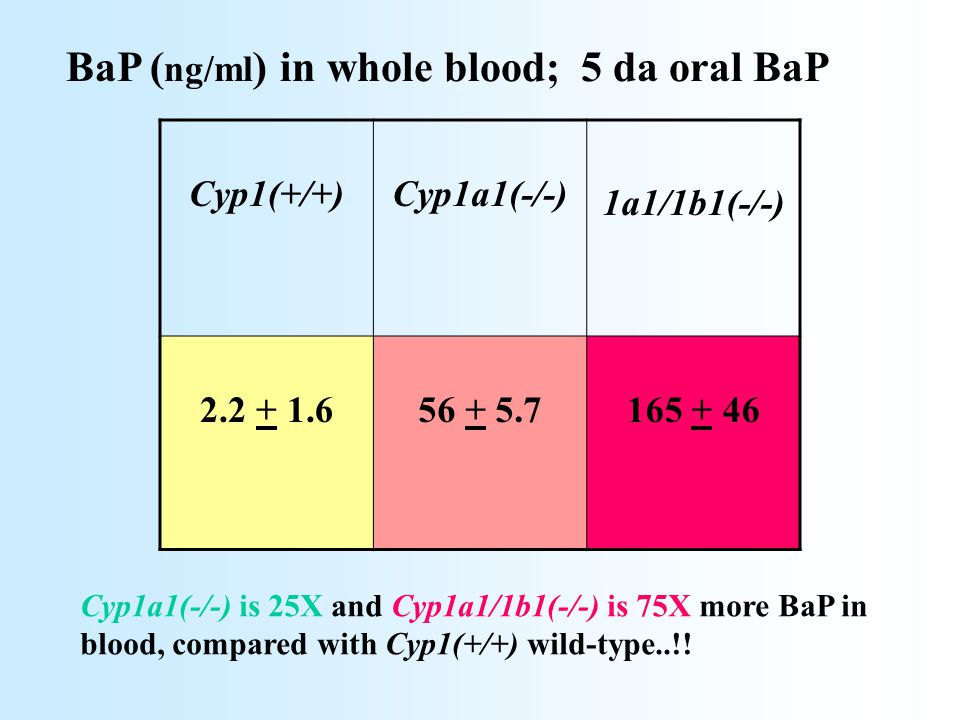Cyp1(+/+) Cyp1a1(-/-) 1a1/1b1(-/-) 2.2 + 1.6 56 + 5.7 165 + 46 BaP ( ng/ml ) in whole blood; 5 da oral BaP Cyp1a1(-/-) is 25X and Cyp1a1/1b1(-/-) is 7