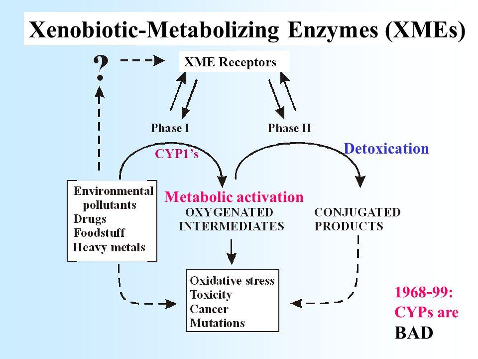 CYP1B1 PAHs Aryl amines Reactive intermediates